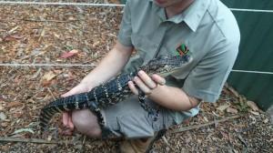 Här är en alligator som jag också har klappat. Mamma tordes inte klappa den.