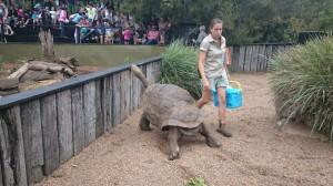 Här är en väldigt stor sköldpadda som heter Hugo.