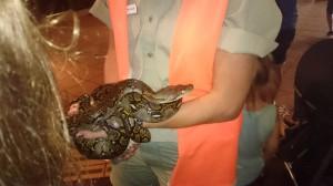 På nyårsafton åkte vi till Australien med våra kompisar. Vi bodde utanför Sydney. En dag åkte vi på utflykt till en djurpark. Den här ormen har jag klappat. Den var kall.