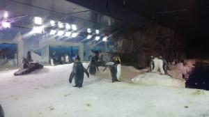 Här är pingviner och vi såg några som var på land och andra var i vattnet. De gick jättekonstigt med armarna utåt.