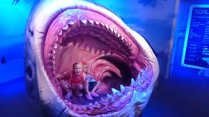 Här är vi i en hajmun. Det var när vi var på ett akvarium i Auckland igår.