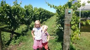 Här är vi på Nordön på en vingård i Hawkey bay