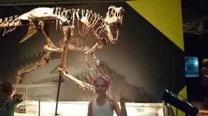 I Wellington gick vi på museum och tittade på dinosaurieskelett